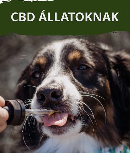 CBD állatoknak