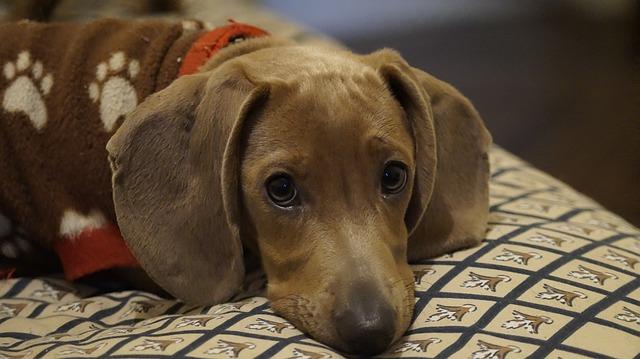Mit tegyél, ha stresszes a kutyád? Eláruljuk!
